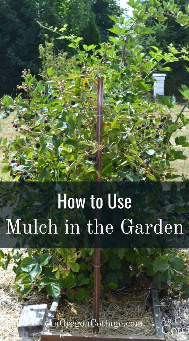 how to use mulch in the garden