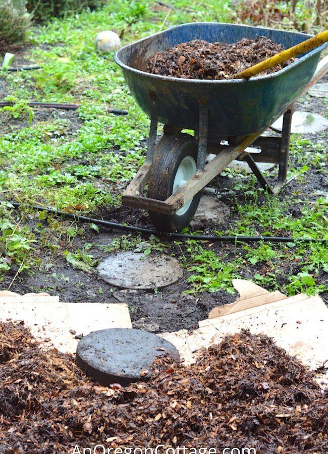 applying mulch in the garden