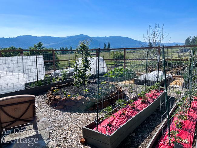 raised bed vegetable garden June 1st