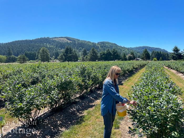 picking blueberries at Oregon farm