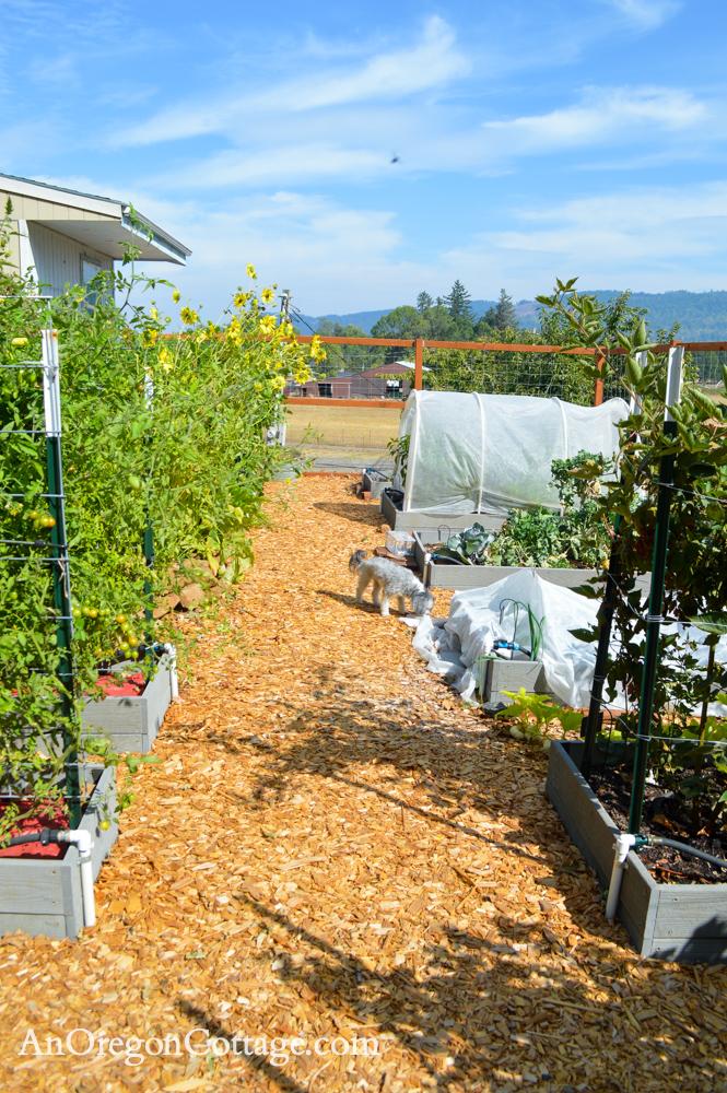 fall garden 21-beds looking east