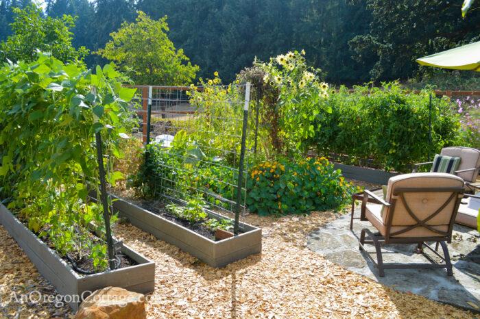 fall garden 21-from arbor-beans