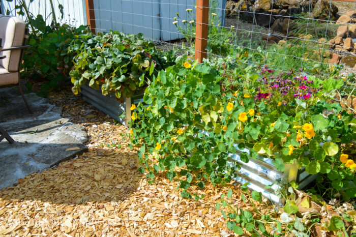 fall garden 21-metal planters